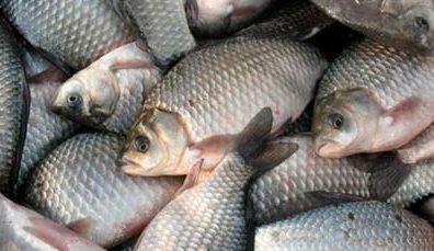 mnogo-ryby-1