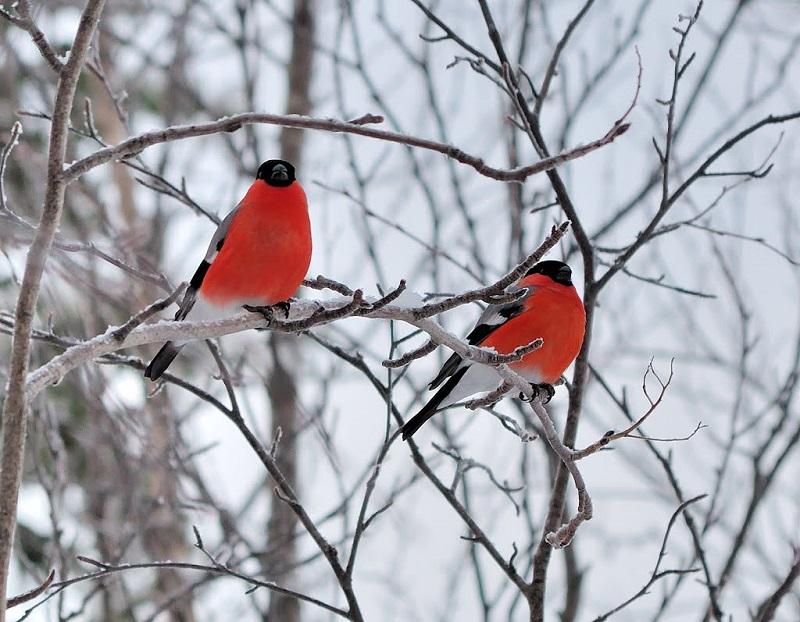 Чому до Харкова більше не прилітають снігурі?