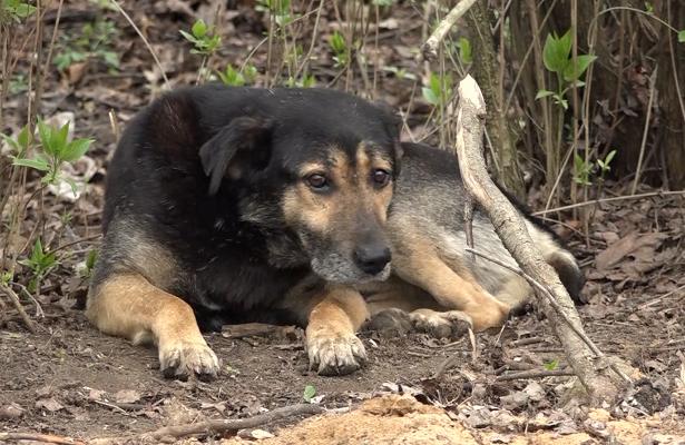 За вбивство собаки чоловік постане перед судом