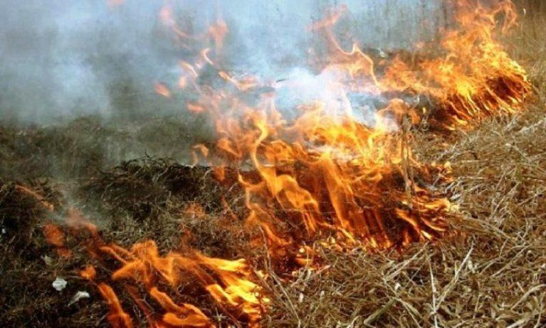 На Харківщині масово випалюють суху траву