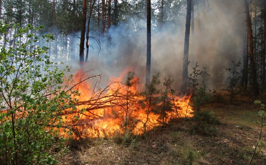 Харків'ян попереджають про небезпеку від вогню
