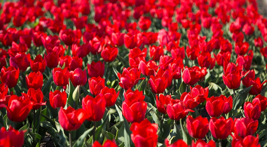 В місті планують висадити понад двох мільйонів квітів