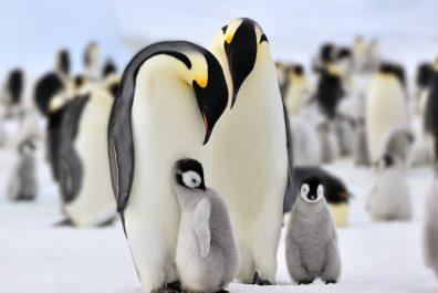 penguin__ant