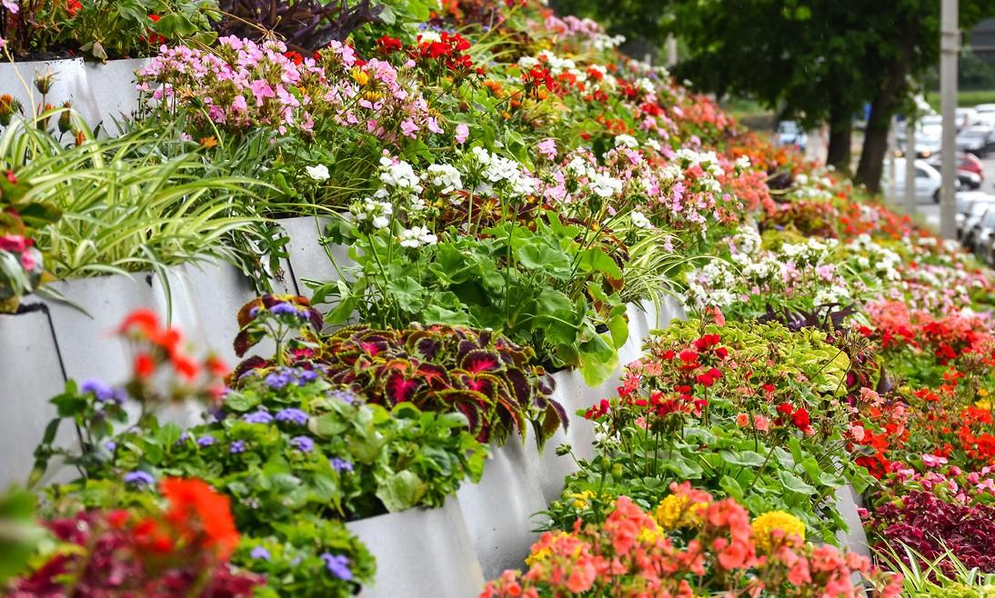 У Харкові почалася весняна висадка дерев та квітів