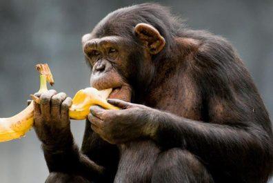 обезьяна-с-бананом