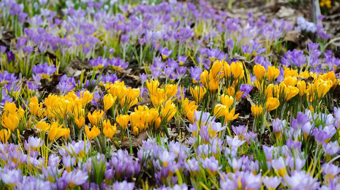 У найстарішому ботанічному саду України розцвіли дивовижні квіти