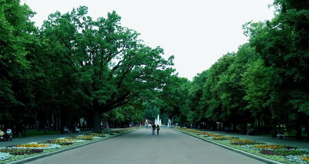 У Харкові навесні планують висадити понад 900 дерев