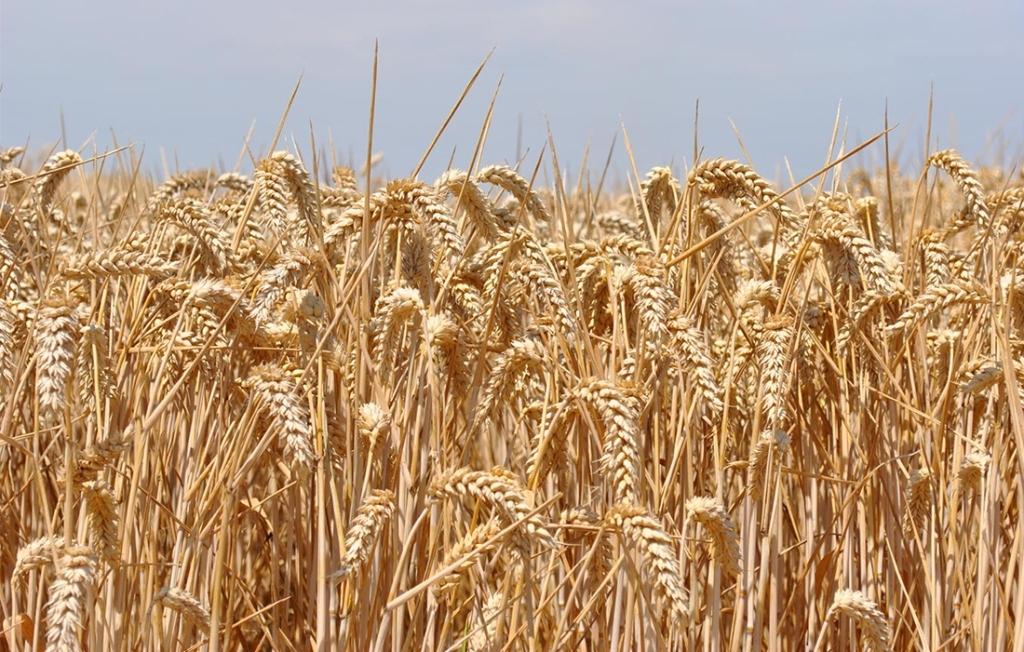 Аграрії області дають гарні прогнози щодо майбутнього врожаю