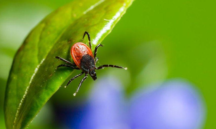 Фахівці попереджують про небезпеку від кліщів