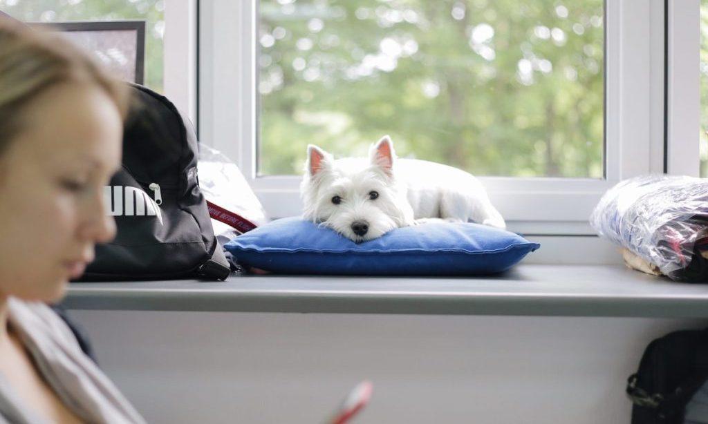 Харків долучився до акції «Візьми собаку на роботу»
