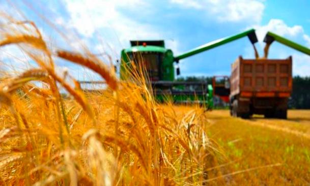 На Харківщині намолотили перші 500 тисяч тонн зерна