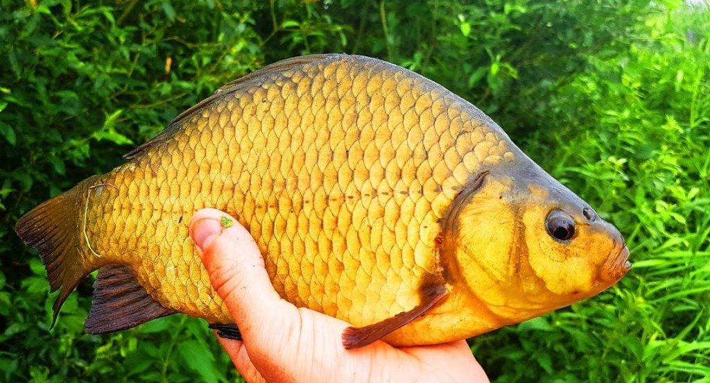 Під Харковом торгували рибою, занесеною до Червоної книги